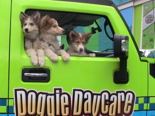 Doggy Daycare Franchise Benefits to Share With Clients